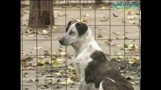 """getlinkyoutube.com-Azil """"Riska"""" Beograd  - Animal shelter """"Riska"""" Belgrade"""