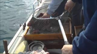 getlinkyoutube.com-ψάρεμα χταποδιών