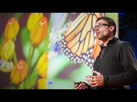 蝴蝶如何自我治療?