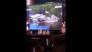 getlinkyoutube.com-Baby einstein animals flash cards