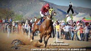 getlinkyoutube.com-Carreras de Caballos en Pueblo de Alamos 15 de Marzo 2015 FINAL DEL MATURITY