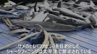 getlinkyoutube.com-太平洋マグロ漁船のありえない話2。残忍なシャークフィニング