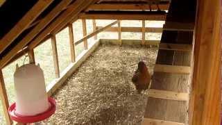 getlinkyoutube.com-Chicken coop tractor updates