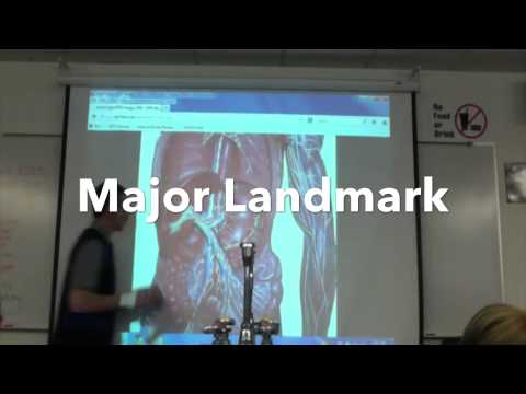 Jonathan Christie PCC 231: week 9: Lab Lecture: Lymphatic System