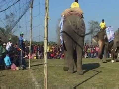 Piłka nożna w wykonaniu słoni