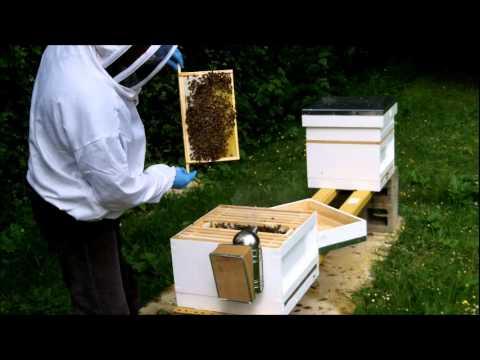 Marking The Queen Bee