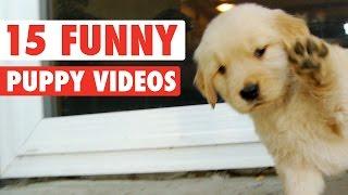 getlinkyoutube.com-15 Funny Puppy Pet Video Compilation 2016