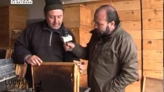 REPORTAJ VIDEO - Cum se pregatesc albinele de primavara