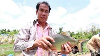 """getlinkyoutube.com-เศรษฐีเกษตร 21/6/58 : """"การเลี้ยงปลา"""" แบบประหยัดต้นทุน"""