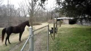 getlinkyoutube.com-Horse and dog play together.