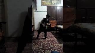 Oye oye dance moves Arabic dance