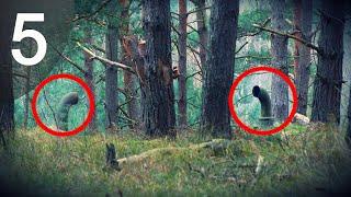 getlinkyoutube.com-5 อันดับ เรื่องแปลกลึกลับที่พบเจอในป่า