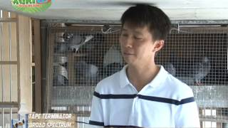 getlinkyoutube.com-AGRITV RACING PIGEON Joseph Yap