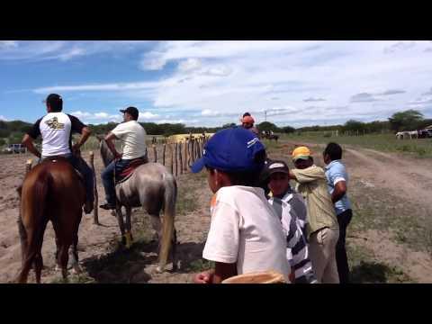 Cavalo de Esteira vaquejada