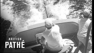 Deep Sea Angling Bout (Puerto Rico 1958)