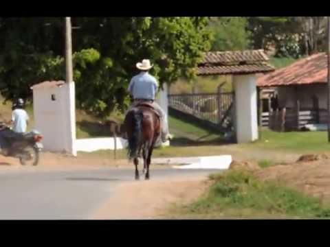 VAIDOSO DO CONFORTO - Garanhão de Marcha Picada - Mangalarga Marchador - Venda de Coberturas