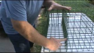 getlinkyoutube.com-Multi-raccoon cage trap, catch more than one at a time