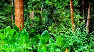 Amazon Rainforest Relaxation - Jungle Meditation Relax Mind & Body