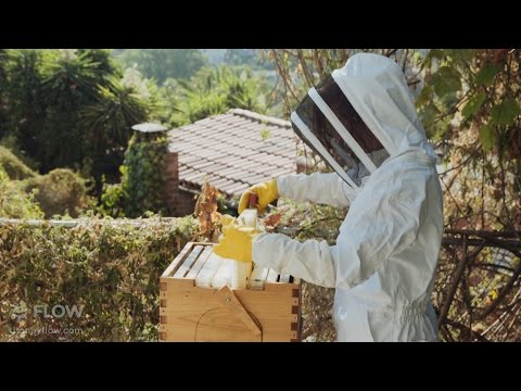 Bees & Chickens share this suburban Los Angeles oasis