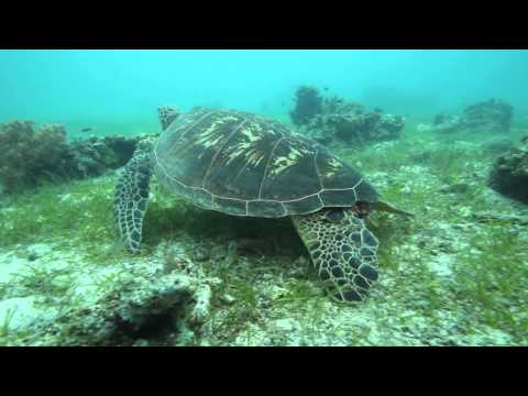 2013 亞潮潛進薄荷島 / Diving in Bohol, Baliscasag Island