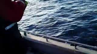 getlinkyoutube.com-Wędkarstwo w Norwegi- dorsze,molwy,czerniaki oraz walka z 100 kg halibutem