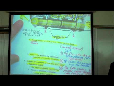 ANATOMY; SKELETAL MUSCLE HISTOLOGY by Professor Fink
