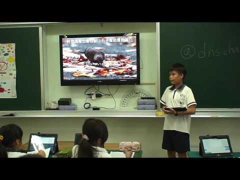 探索珠頸斑鳩 - YouTube
