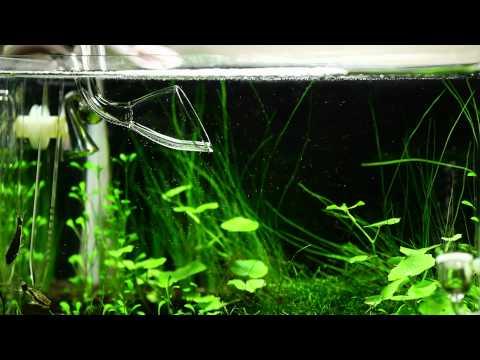 Vivarium planted nano