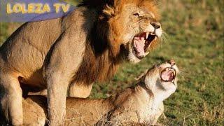 Hawa ndio Simba 'LOLEZA TV MBEYA'