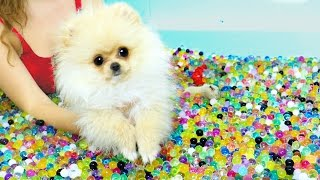 Puppies VS Orbeez Challenge!