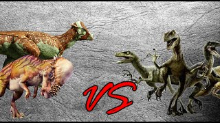getlinkyoutube.com-Pachycephalosaurus Herd vs Velociraptor Squad