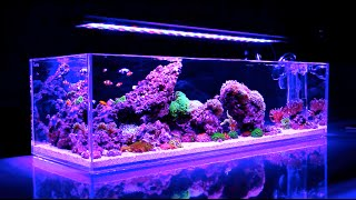 Reef Iwagumi || UNBELIEVABLE Reef Aquarium HD