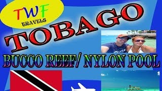 getlinkyoutube.com-(TWF) Bucco Reef & Nylon Pool (Tobago) 2014