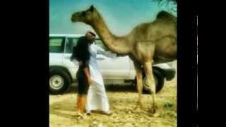 getlinkyoutube.com-شيله لبيه لبيه يالغالي حصرياً .اداء محمد فهد القحطاني