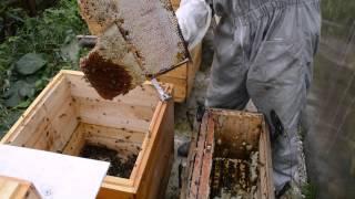 getlinkyoutube.com-Сколько можно получить меда из одной ловушки?