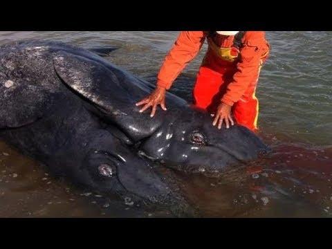 5 casos impactantes de monstruos   marinos  reales