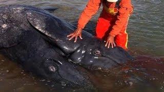 getlinkyoutube.com-5 casos impactantes de monstruos   marinos  reales