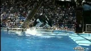 getlinkyoutube.com-Whale Kills Trainer at Sea World