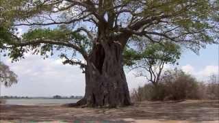 Afrika: Der Malawisee  -  See der Sterne (DOKU)