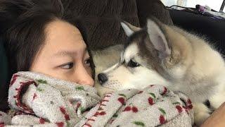 getlinkyoutube.com-Dogs Waking Up Owners (HD) [Funny Pets]