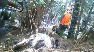 getlinkyoutube.com-猪猟20120212実猟-2 止めて撃ち獲らせる 鈴木紀州犬&幻のビーグル