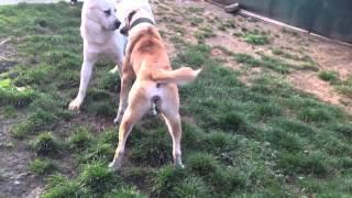 getlinkyoutube.com-dog aziat