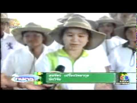 Vegetable Grafting (Thai) - World Vegetable Center