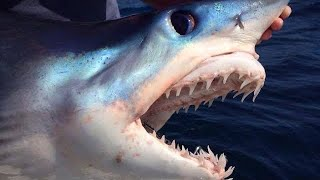 getlinkyoutube.com-BIG MAKO SHARKS - YouFishTV