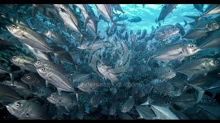"""getlinkyoutube.com-4K UltraHD underwater nature video stock footage Demo Reel UHD """"Undersea Realm in 4K"""""""