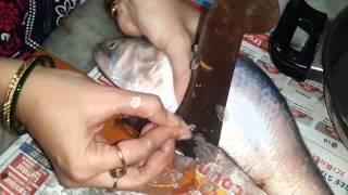 getlinkyoutube.com-ilish fish