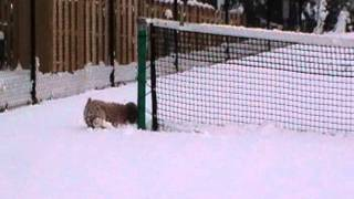 getlinkyoutube.com-Dog Meets Snow for the first time.