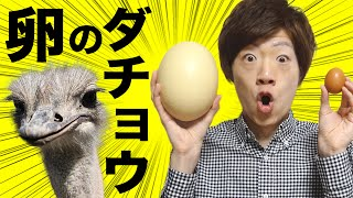 getlinkyoutube.com-ダチョウの卵で超巨大目玉焼き作ってみた!
