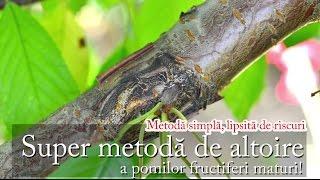 getlinkyoutube.com-Super metodă de altoire a pomilor fructiferi maturi