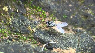 getlinkyoutube.com-Hormigas rojas al ataque